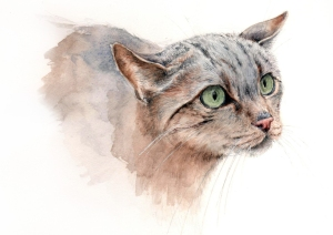 """felis-silvestris_watercolor_xellcampos"""
